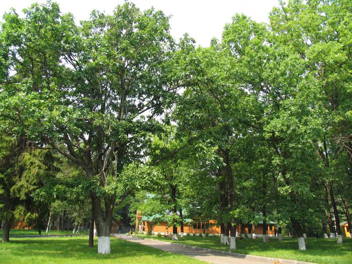 Загородный отель Фиеста-парк